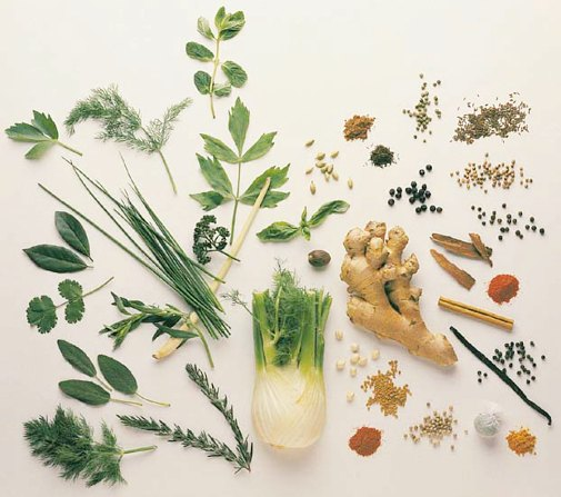 medicinal_herbs_display