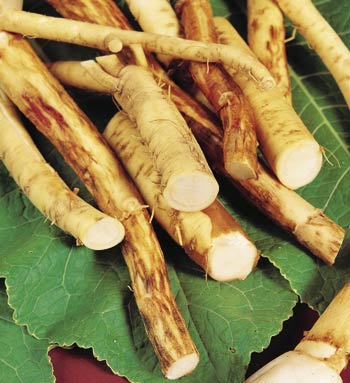 horseradish can help with sinusitis!