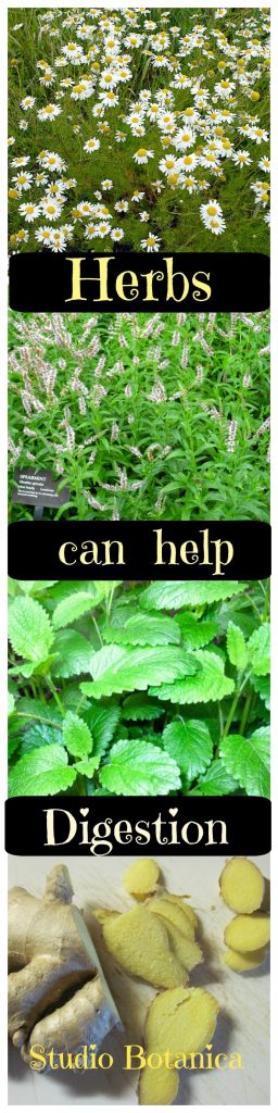 Herbs can help Digestion