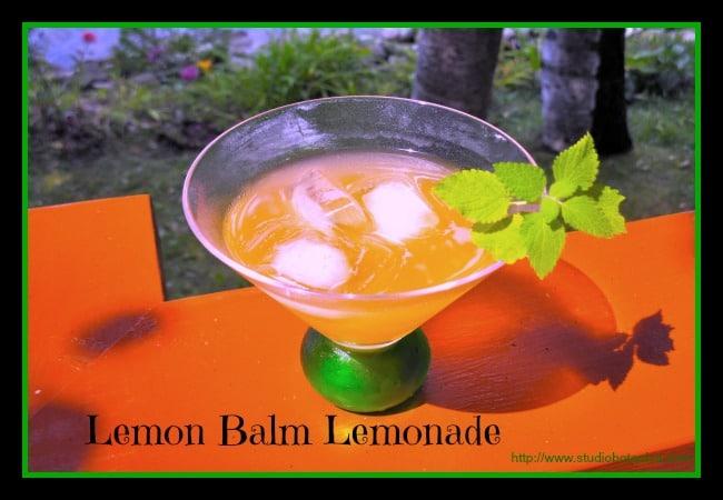 LemonBalmAdeglassSBfinal