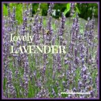 LavenderIHAFBsmall