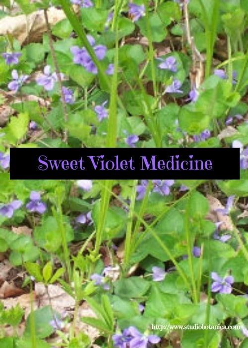 violetmedicinesbvert