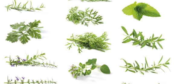 HerbsAssorted