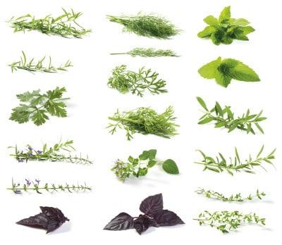 herbsmedley