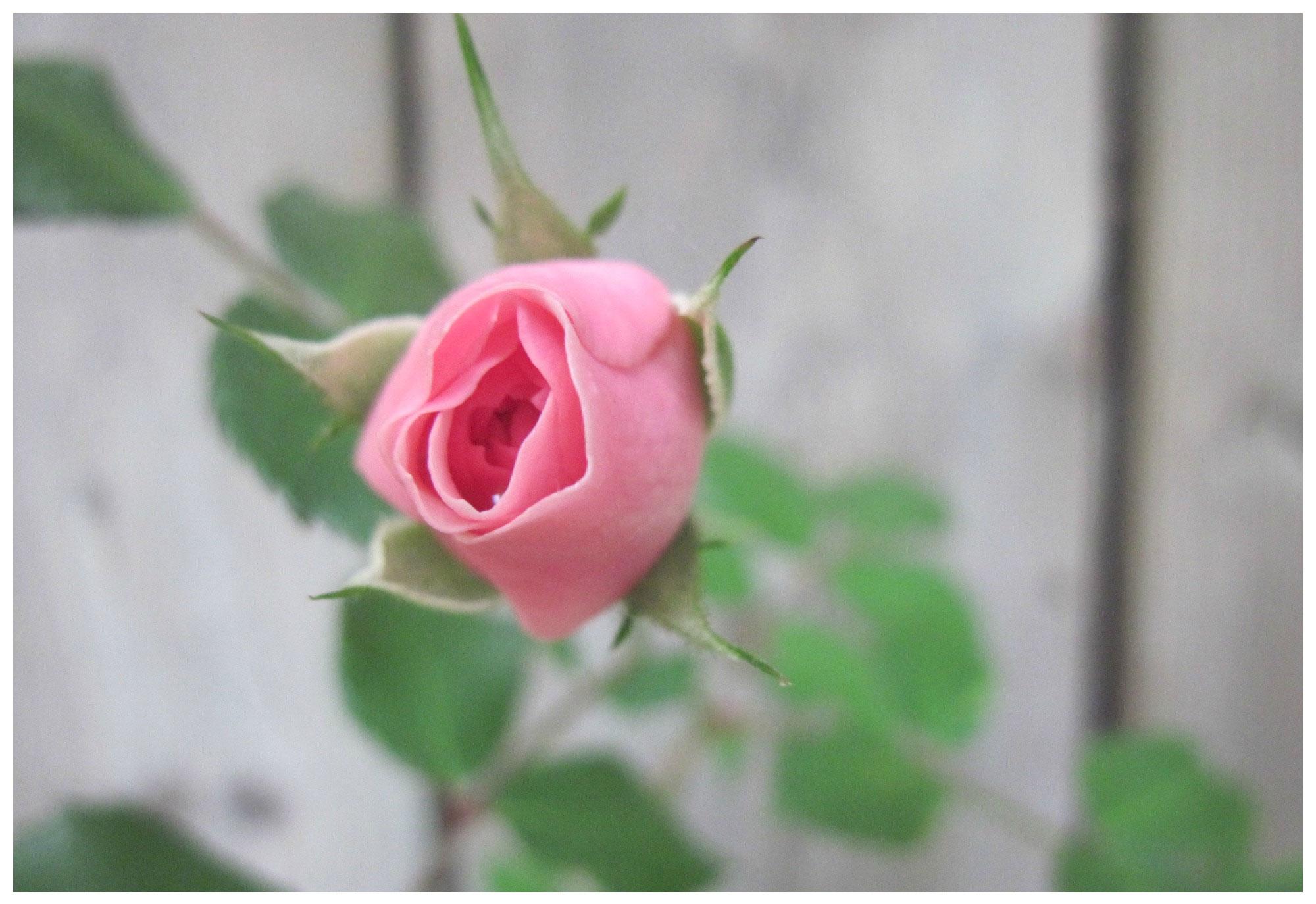 2015 treasure lisa rose amp prescott king - 1 9
