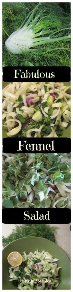 Fabulous Fennel Salad