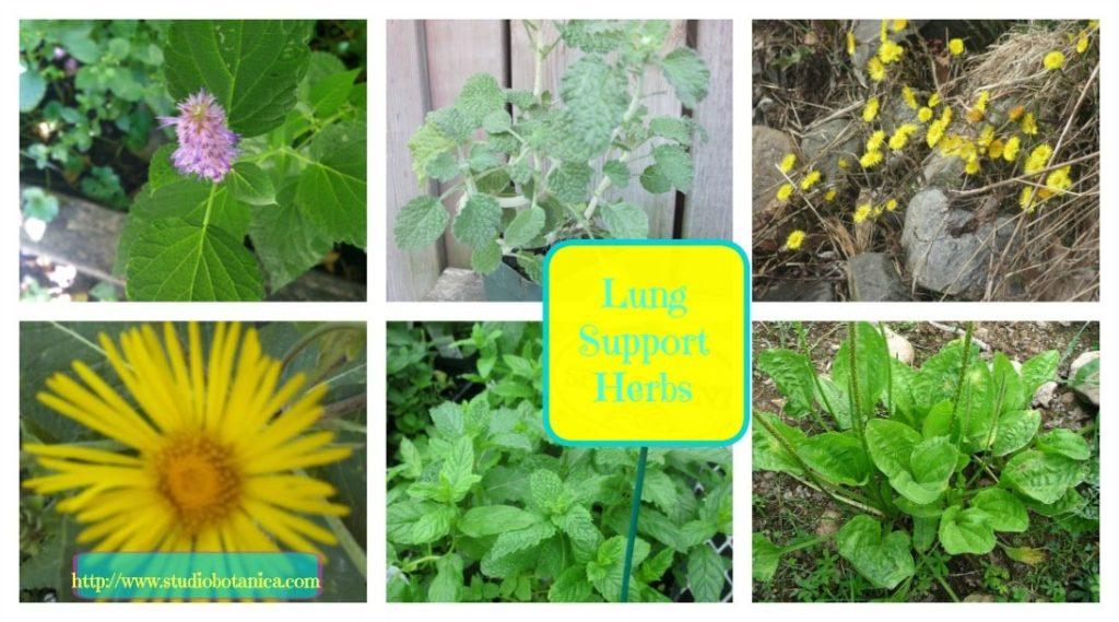 Lung herbs help create better Respiratory Health