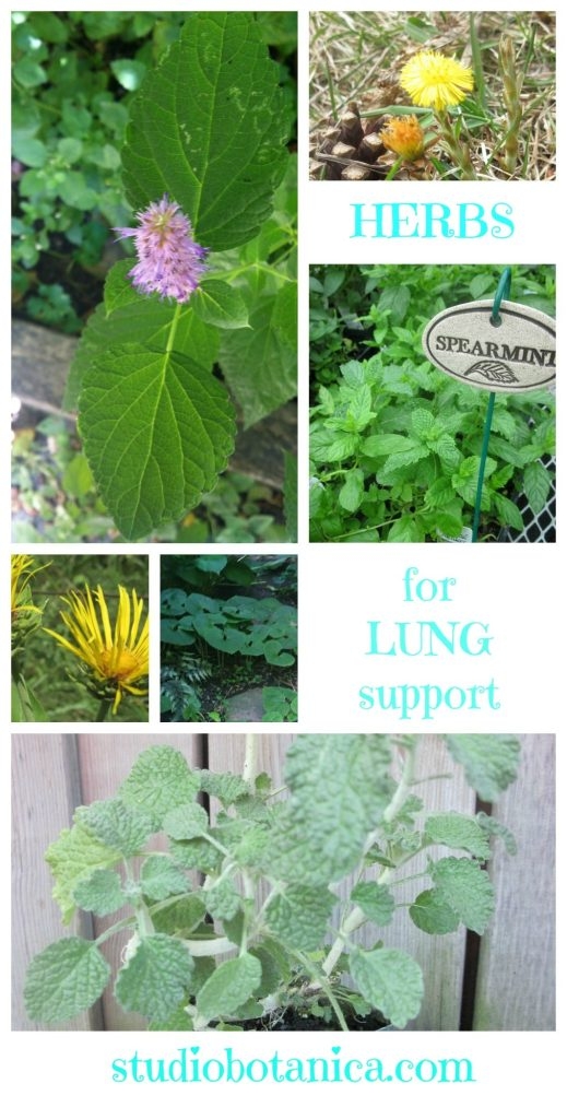 LungSupportVertSB