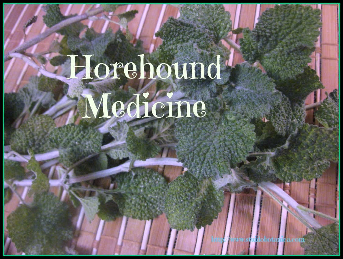 Horehound Medicine Studio Botanica