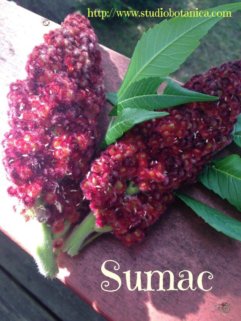 SumacberriesSb
