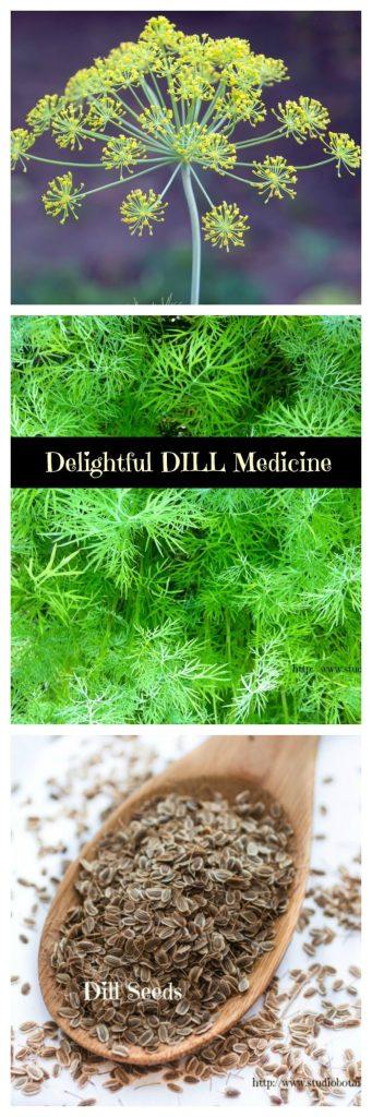 DillMedicineVert
