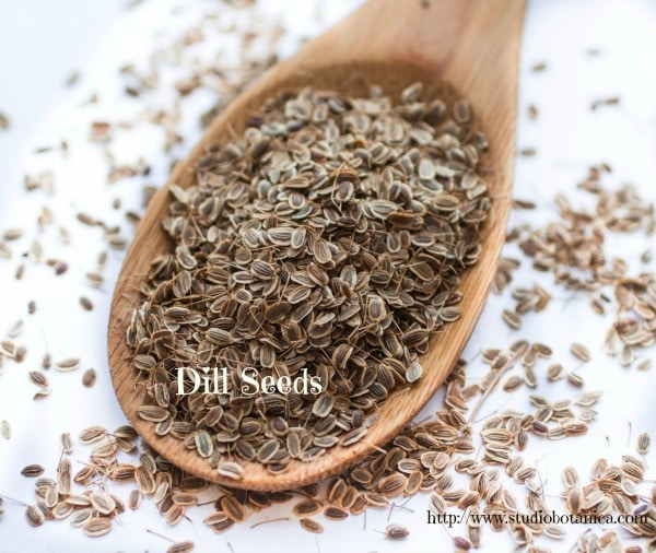 how to make dill seed tea