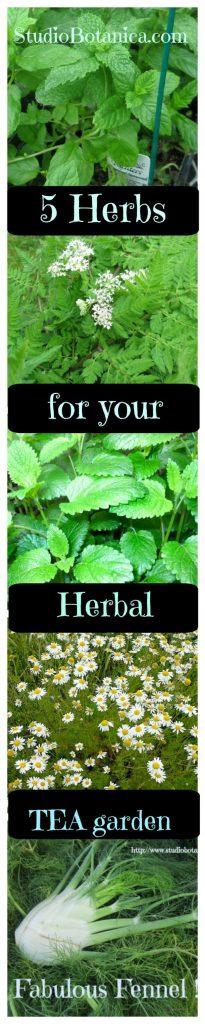 Herbal Tea Garden