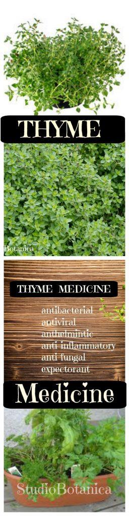 Thyme Medcine